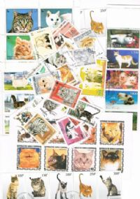 100 different domestic cats packet